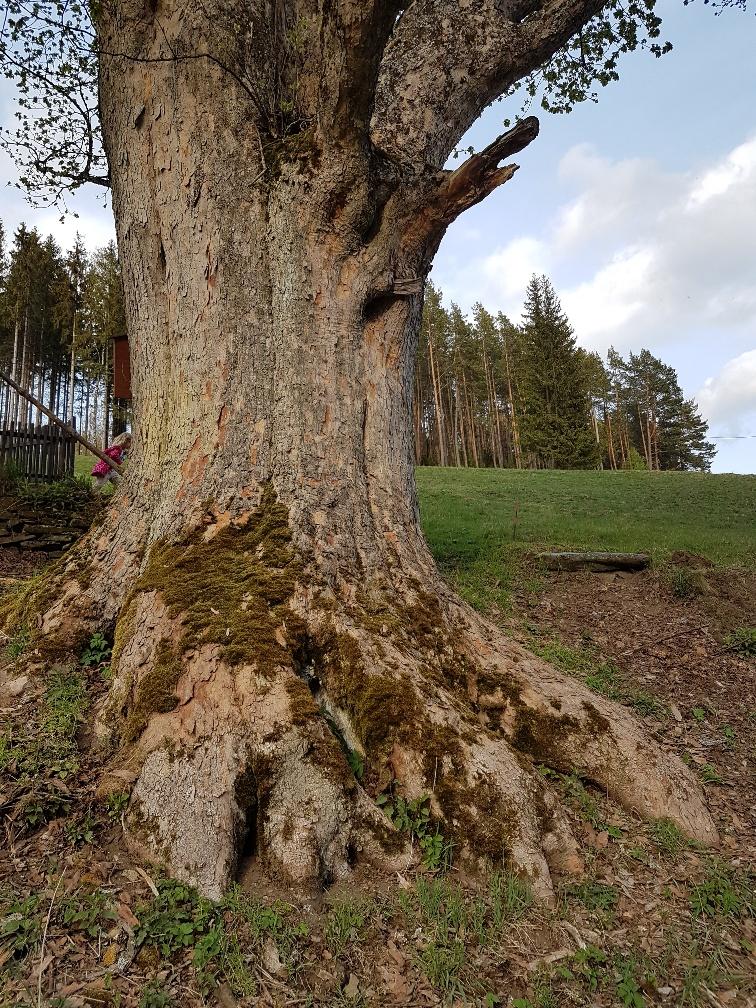 památný strom_okolí